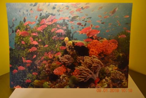 "****""BEAUTIFUL OCEAN"" BLANK CARD W/ENVELOPE***FREE SHIPPING"