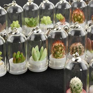 Cactus Miniature Succulent Cacti Terrarium Wearable Necklace Live Plant Gift