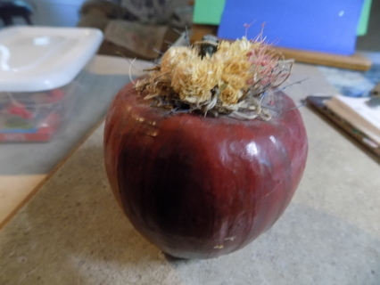 3 inch apple with straw flowers and leaf on top