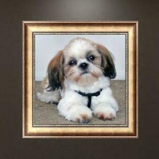 Cute Dog 5D DIY Diamond Painting Embroidery Rhinestones Cross Stitch Kit Decors
