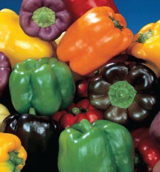 Mixed Bell Pepper Seeds