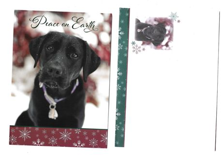 Christmas Card Unused With Envelope Dog