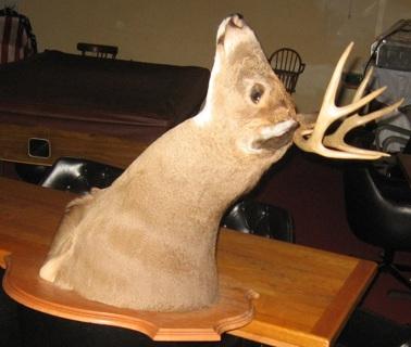 deer head taxidermy wall hanging