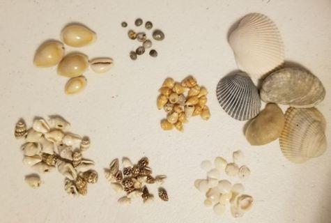 Seashells from Mexico