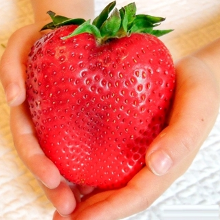 200 Giant Strawberry Seeds Edible For Home Garden Plants Fruits Seed