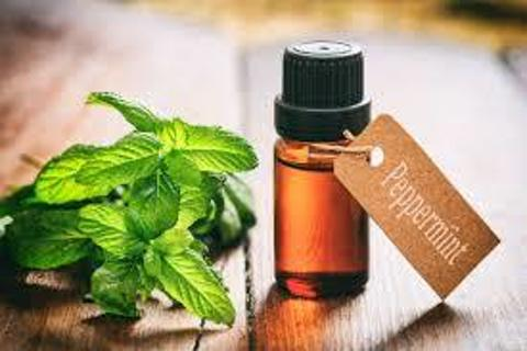 Japanese Peppermint Essential Oil 1/2 oz (15ml) GIN Gets2