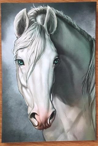 "BEAUTIFUL WHITE HORSE  - 4 x 3"" MAGNET"