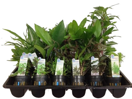 6 Assorted Plants