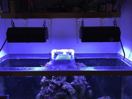 Free reef aquarium lights 2x pfo hqi 250w metal halide pendants and free reef aquarium lights 2x pfo hqi 250w metal halide pendants and evc electronic ballasts mozeypictures Images