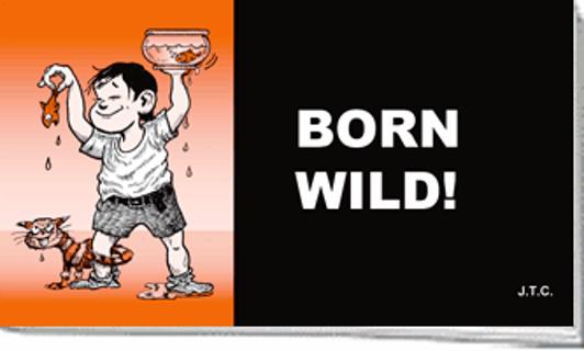 Born Wild!
