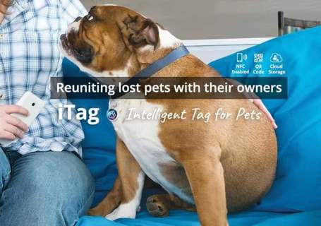 iTag gps pet tracker Brand New In Package