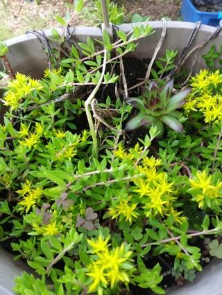 Mixed Plant Seeds/Bulbs