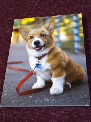 Notecards - Dog On Leash
