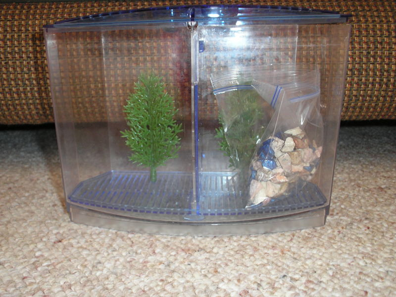 Free divided betta fish tank and starter kit other pet for Fish tank starter kit