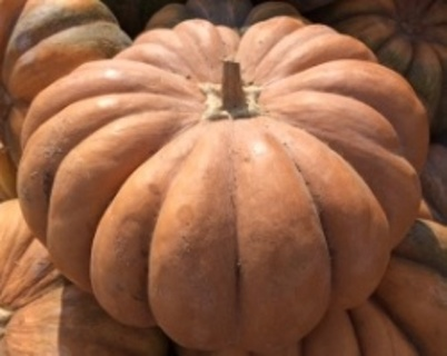 Fairy Tale pumpkin seeds 10