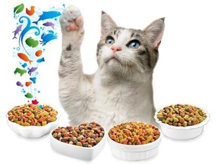 Free: Homemade Cat/ Kitten Food Recipes
