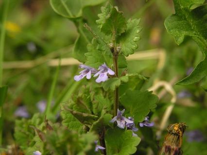 Mint Seedling / Plant!