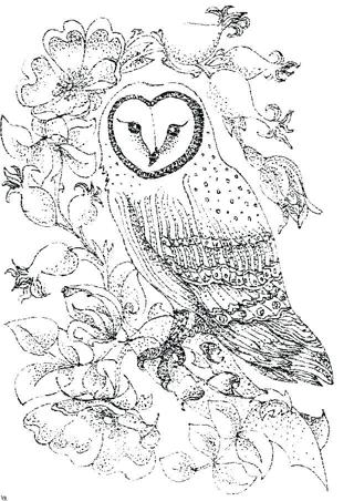 ❄ (New) 6 Asst. Owl Coloring Sheets ❄