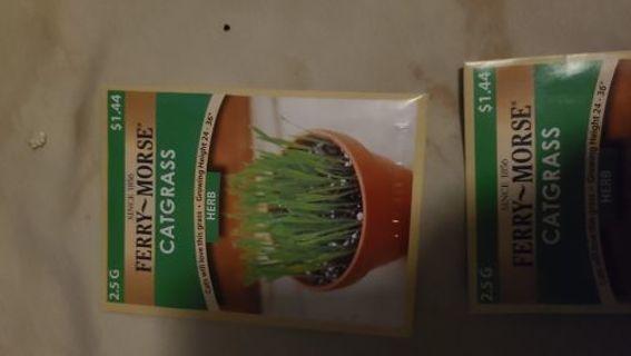 Cat grass seeds - bag 1