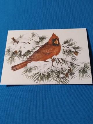 Notecard - Northern Cardinal