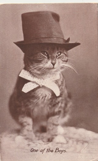 Vintage Used Postcard: 1911 One of the Boys...Cat