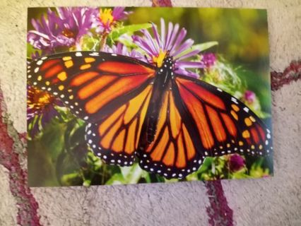 1 Blank Butterfly Greeting Card with Envelope