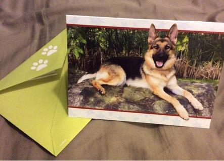 German Shepherd Dog Card Blank Inside w/ Matching Envelope - FREE Shipping!