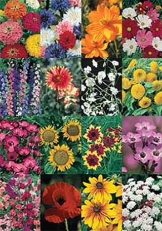 FLOWER GARDEN WILDFLOWER MIX SEEDS PACKET