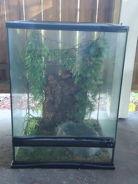 free zoo med terrarium 18x18x24 reptile auctions for free stuff. Black Bedroom Furniture Sets. Home Design Ideas