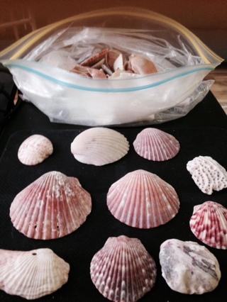 Bag of Sea Shells