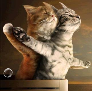 5D DIY Diamond Painting Titanic Animal Cat lovers Cross Stitch Mosaic