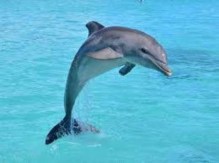 5 Pictures of Dolphins