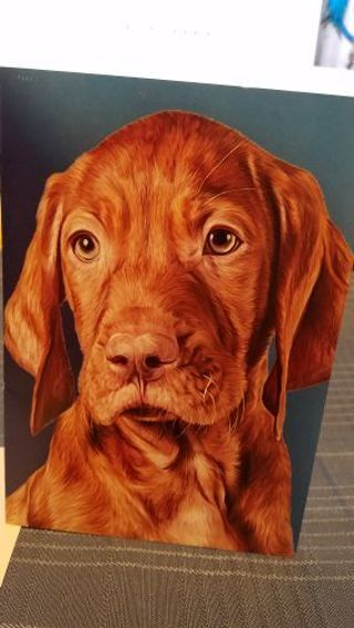 ADORABLE PUP LOOKING VERY SERIOUS CARD W/ ENVELOPE
