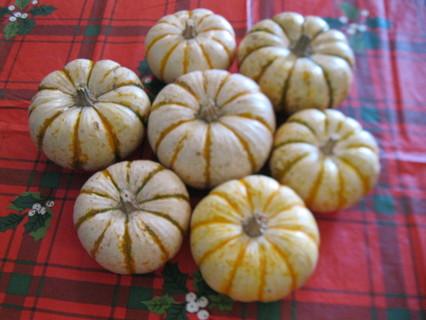 Tiger Stripe Ornamental Pumpkin Seeds/ 10+