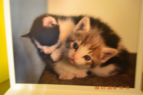****A PAIR OF KITTENS BLANK CARD W/ENVELOPE***FREE SHIPPING