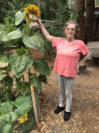 Seeds - Large Sunflower Seeds