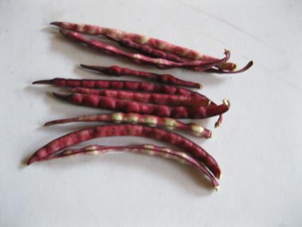 10 Purple Hull Pea Seeds