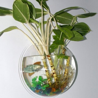 Awesome Wall Bubble Aquarium/Terrarium