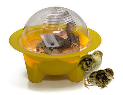 Mini Egg Incubator with Guidebook
