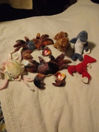 Beanie Babies Sea Life