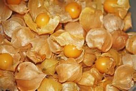 12 plus Aunt Molly's Ground Cherry seed