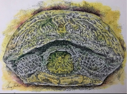 "TURTLE  - 5 x 7"" art card by artist Nina Struthers - GIN ONLY"