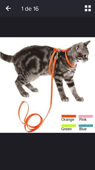 Dogs & Cats Harnesses