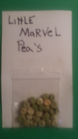 1 pack of little marvel peas seeds free shipping