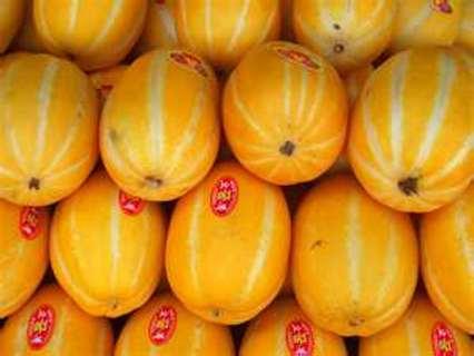 Seeds Korean Melon Aka Hybrid Golden Liner