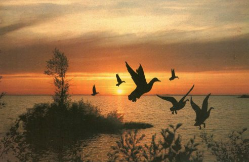 Vintage Used Postcard: Long Flight Ends at Sunset, Ontario, Canada
