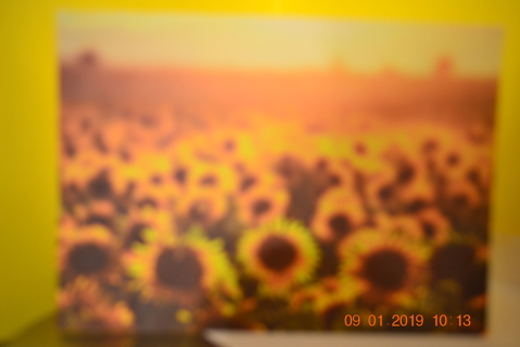 ****FIELD OF SUNFLOWERS BLANK CARD W/ENVELOPE***FREE SHIPPING