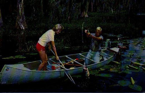 fishing in Dixie - unused postcard