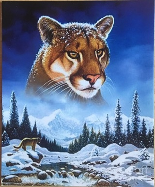 "BEAUTIFUL MOUNTAIN LION - 4 x 5"" MAGNET"