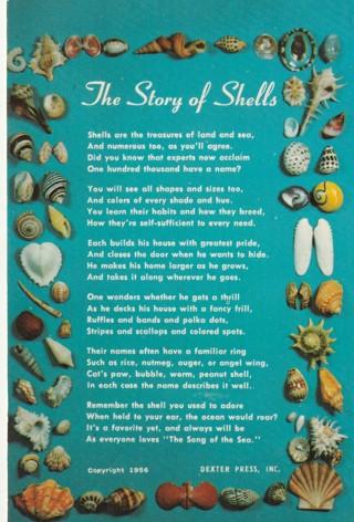 Vintage Unused Postcard: The Story of Shells